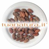 PIANTA OFFICINALE Cacao fave intere tostate (Theobroma Cacao L.) 100 gr
